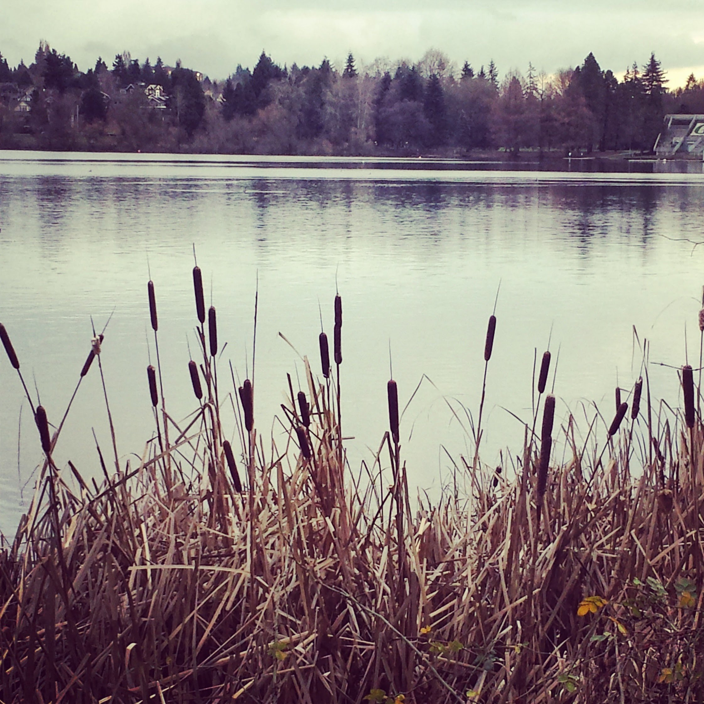 Photo Journal - Green Lake, Seattle, WA by Sabrina Brett 1