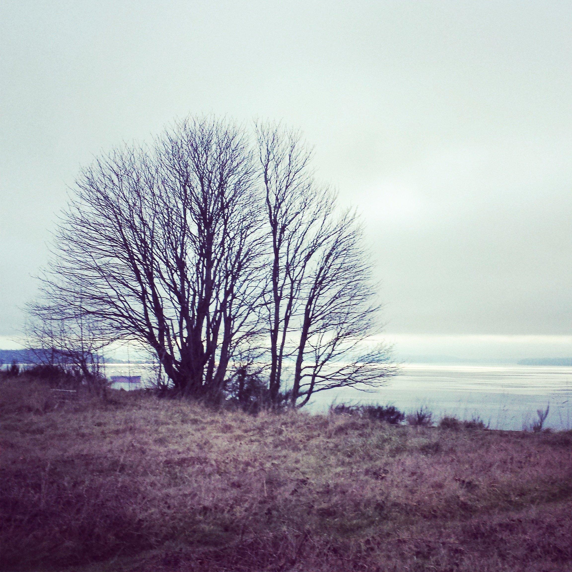Photo Journal: Discovery Park, Seattle, WA, Sabrina Brett 3