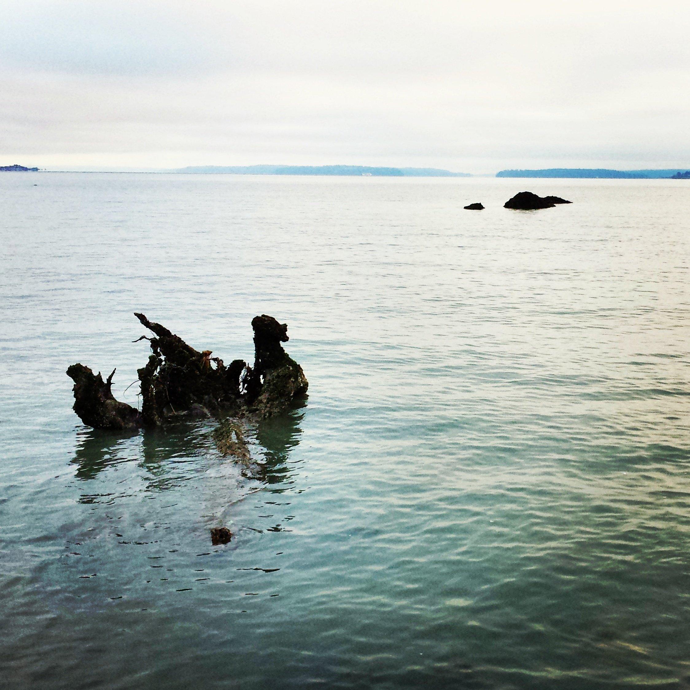 Photo Journal: Discovery Park, Seattle, WA, Sabrina Brett 6