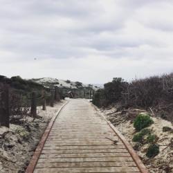 Asilomar Beach, Pacific Grove, CA,  by Sabrina Brett