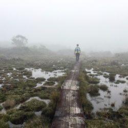 kauai_sabrina-brett_kokee-state-park-swamp-boardwalk